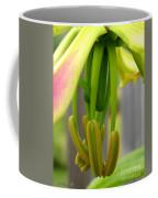 Gloriosa Named Rothschildiana Coffee Mug