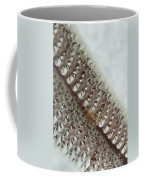 Goby On A Sea Pen, Indonesia Coffee Mug