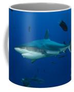 Gray Reef Shark, Kimbe Bay, Papua New Coffee Mug