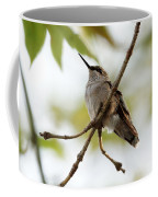 Hummingbird Coffee Mug