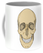 Illustration Of Anterior Skull Coffee Mug