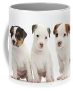 Jack Russell Puppies Coffee Mug