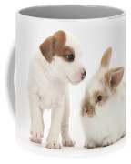 Jack Russell Terrier Puppy And Baby Coffee Mug