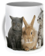 Kittens And Rabbit Coffee Mug