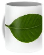 Leaf Of A Coffee Plant Coffea Sp Coffee Mug