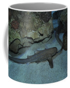 Leopard Shark Courting, Blue Zoo Coffee Mug
