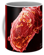 Lymphocyte With Hiv Cluster Coffee Mug by Science Source