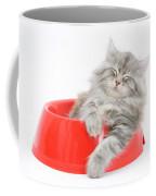 Maine Coon Kitten Coffee Mug