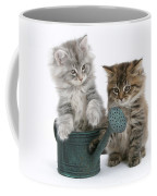 Maine Coon Kitttens Coffee Mug