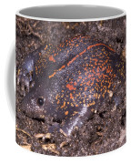 Mexican Burrowing Toad Coffee Mug