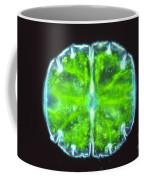 Micrasterias Coffee Mug by M. I. Walker