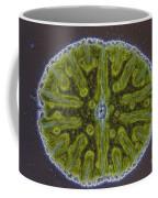 Micrasterias Sp. Algae Lm Coffee Mug