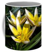 Mini Botanical Tulip Named Dasystemon Tarda Coffee Mug