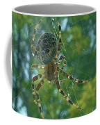 Orb Spider      Summer           Indiana Coffee Mug