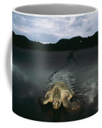 Pacific Ridley Turtle Lepidochelys Coffee Mug