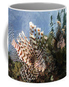 Pair Of Lionfish, Indonesia Coffee Mug