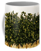Photoperiodicity In Soybean Plants Coffee Mug by Science Source