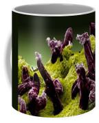 Plasmodium Gallinaceum, Sem Coffee Mug