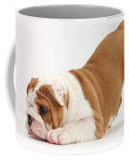 Playful Bulldog Pup Coffee Mug