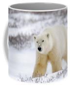 Polar Bear, Churchill, Manitoba Coffee Mug