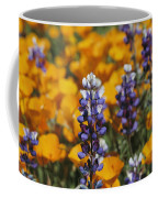 Poppies And Lupine Flowers In A Santa Coffee Mug