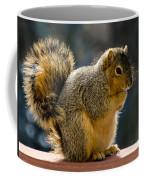 Praying Squirrel  Coffee Mug
