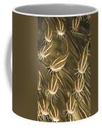Puerto Galera, Philippines, Southeast Coffee Mug