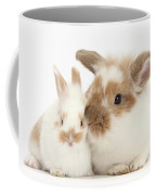Rabbit And Baby Bunny Coffee Mug