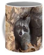 Raccoon Procyon Lotor Coffee Mug