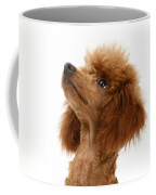 Red Toy Poodle Coffee Mug