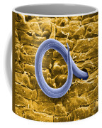 Root Knot Nematode Sem Coffee Mug