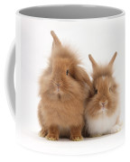 Sandy Lionhead Rabbits Coffee Mug