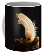Sea Vase Coffee Mug