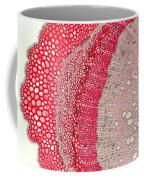 Silver Wattle Stem Coffee Mug