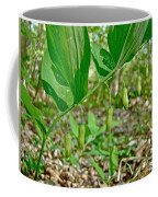 Solomon's Seal Wildflower - Polygonatum Commutatum Coffee Mug