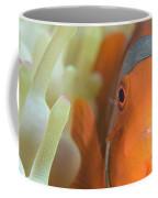 Spinecheek Anemonefish In Anemone Coffee Mug