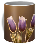 Spring Time Crocus Flower Coffee Mug