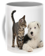 Tabby Kitten & Border Collie Coffee Mug