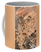 Termite Nest Reticulitermes Flavipes Coffee Mug by Ted Kinsman