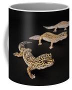 Three Female Leopard Geckos Eublepharis Coffee Mug