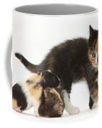 Tortoiseshell Kitten With Baby Coffee Mug