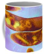 Tuberculosis Bacteria Coffee Mug