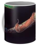 Velvet Worm Coffee Mug