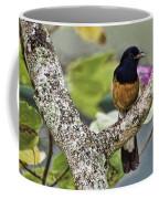 White-rumped Shama Coffee Mug