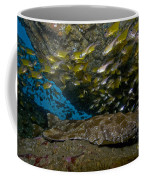 Wobbegong Shark And Cardinalfish, Byron Coffee Mug