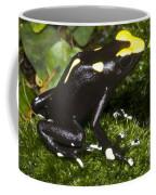 Dyeing Poison Frog Coffee Mug