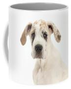 Great Dane Pup Coffee Mug