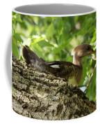 Immature Hooded Merganser Coffee Mug