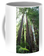 Redwoods Sequoia Sempervirens Coffee Mug