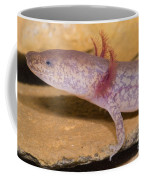 West Virginia Spring Salamander Coffee Mug